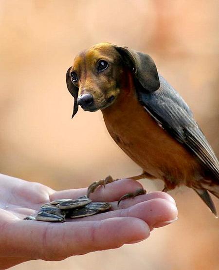 dogbird03