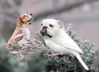 dogbird08