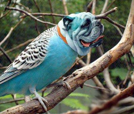 dogbird09