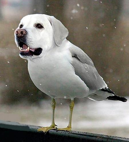 dogbird10