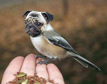 dogbird11