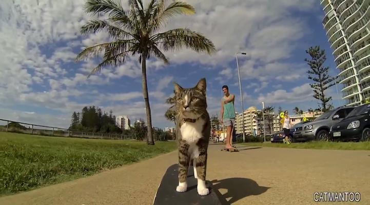 SkateboardCat1