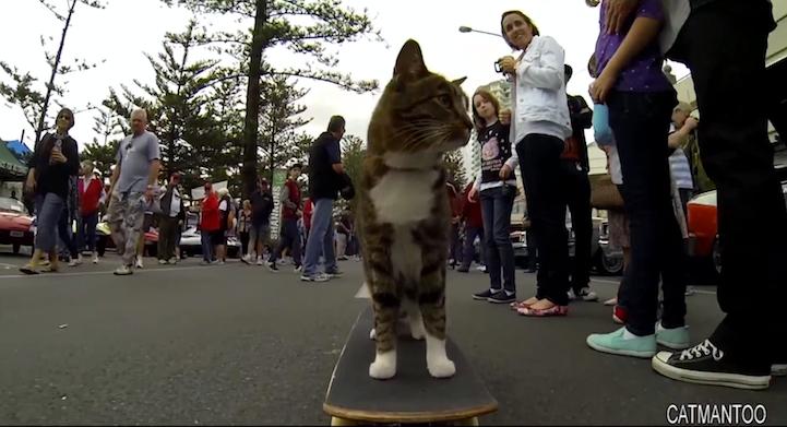 SkateboardCat3