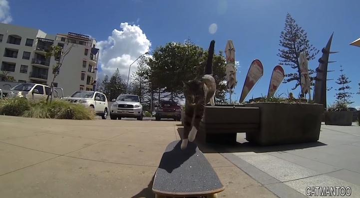 SkateboardCat4