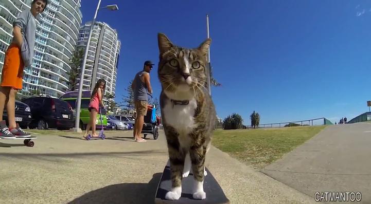 SkateboardCat6